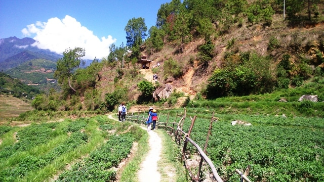 Chili Plantation in Higher Altitudes of Paro