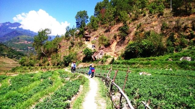 Chili plantation on the way to 'khansum Yulley Namgyal Chorten'