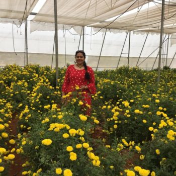 ASIA: Colorful Roses From South India Spread Fragrance Around the Globe